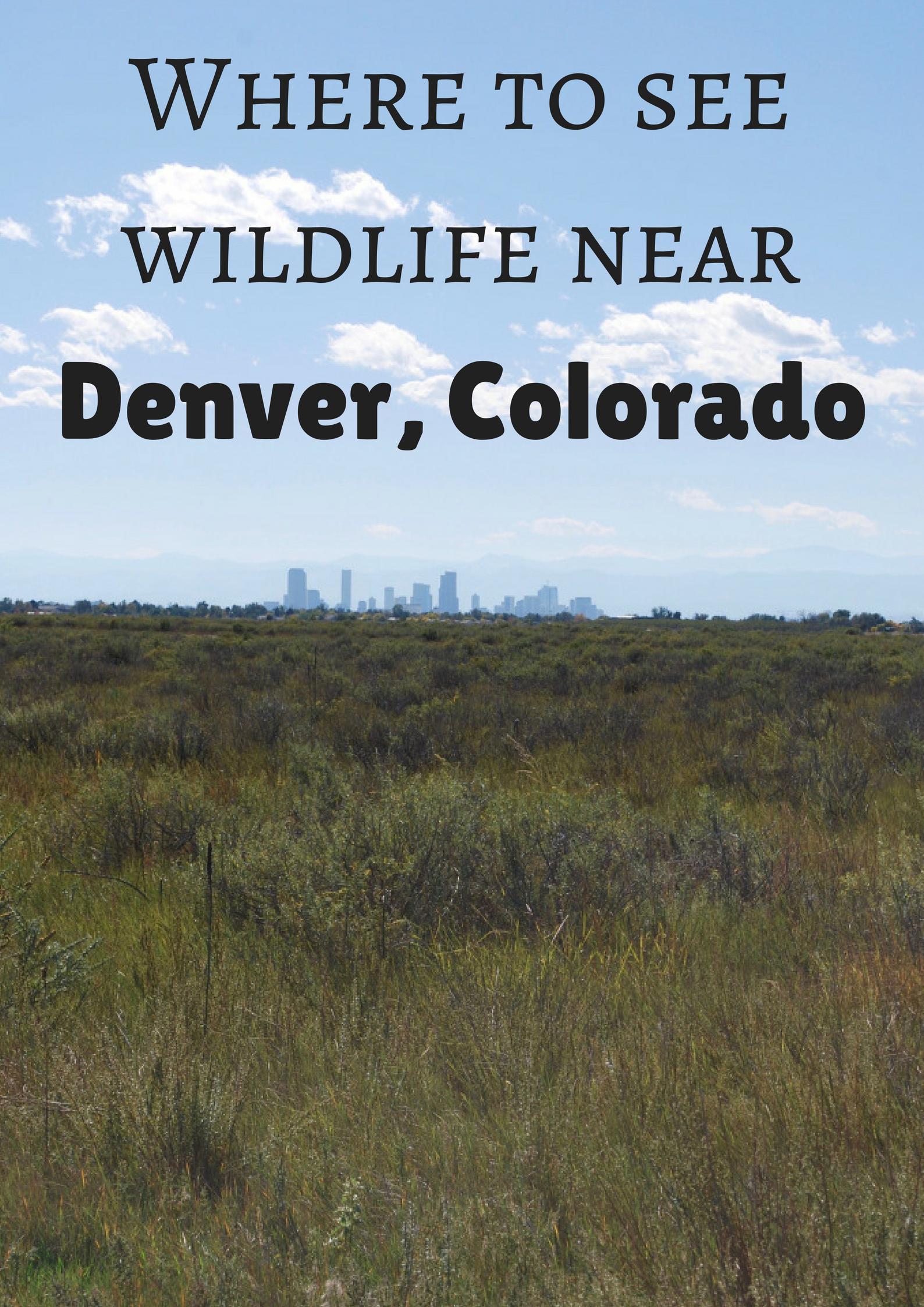 where to see wildlife near denver colorado with images colorado visit denver wildlife pinterest