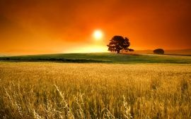 Sunny Day Sunset Wallpaper Nature