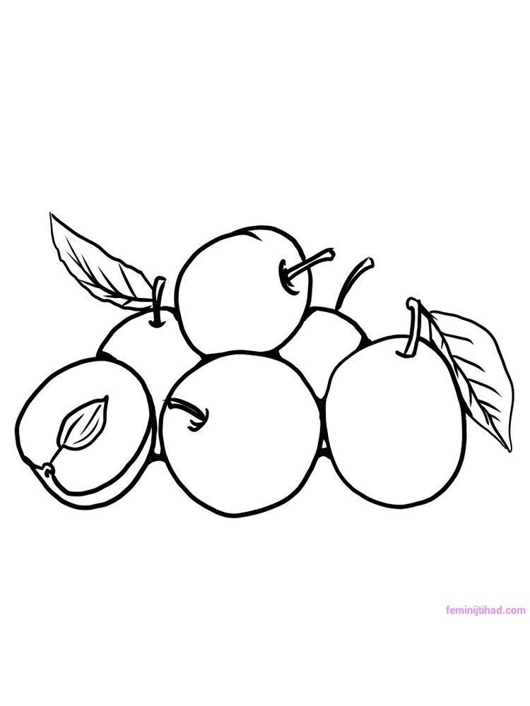 Plum For Coloring Page Plums Belong To The Rosaceae Family Which