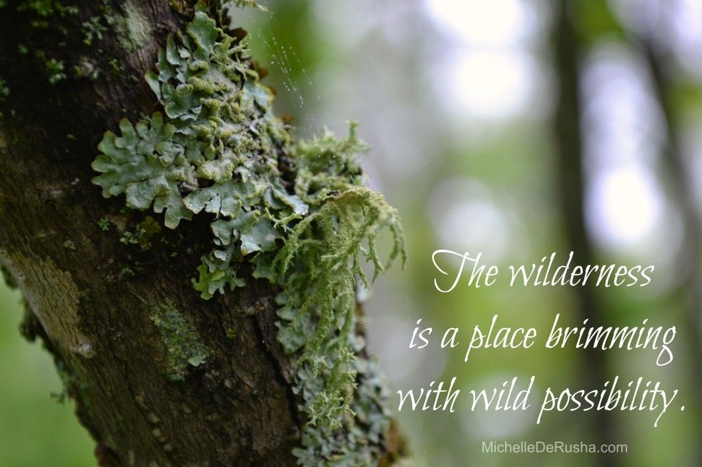 The wilderness is the place God's people stay and wait while God is up to something they can't possibly imagine.