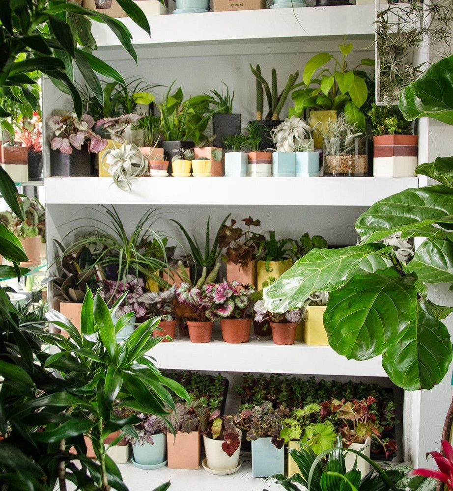 Where To Buy Plants Online Best Houseplant Delivery 400 x 300