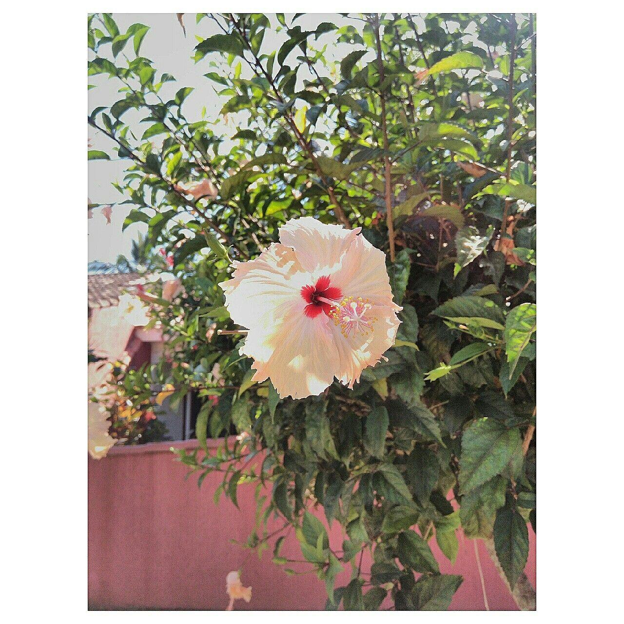 Flor. Itanhaém SP Instagram: camilapedral Foto de: Camila Pedral