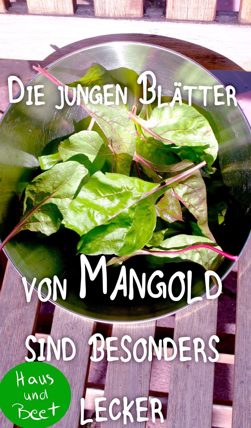 Blattgemuse Das Gesunde Mangold Rezepte Vegetarisch Winter Winter Mangold Das Gesunde Blattgemuse Im Winter Mang Mangold Mangold Rezepte Rezepte