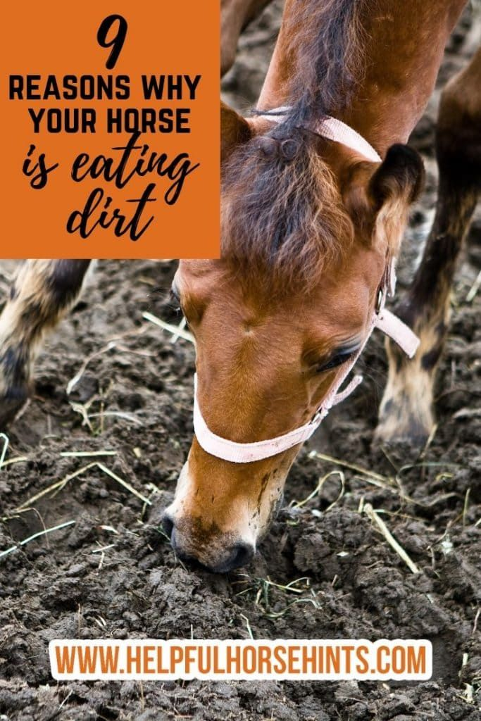 9 Reasons Horses Eat Dirt and What You Can Do to Stop It