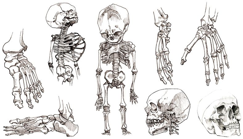 Dessin De Pied Humain dessins croquis squelette humain pieds main crane foetus | dessin