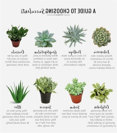 This Guide To Growing Succulents Has Everything You Need To Start Gardening  With Succulents