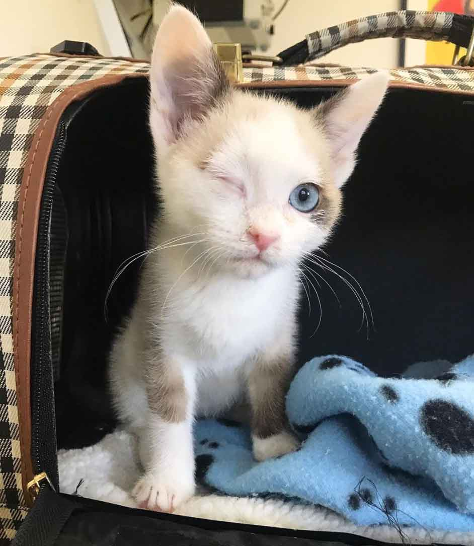 Kitten With A Wink Was Brought Back From The Brink We Love Cats And Kittens In 2020 Sick Kitten Cats And Kittens Cat Care