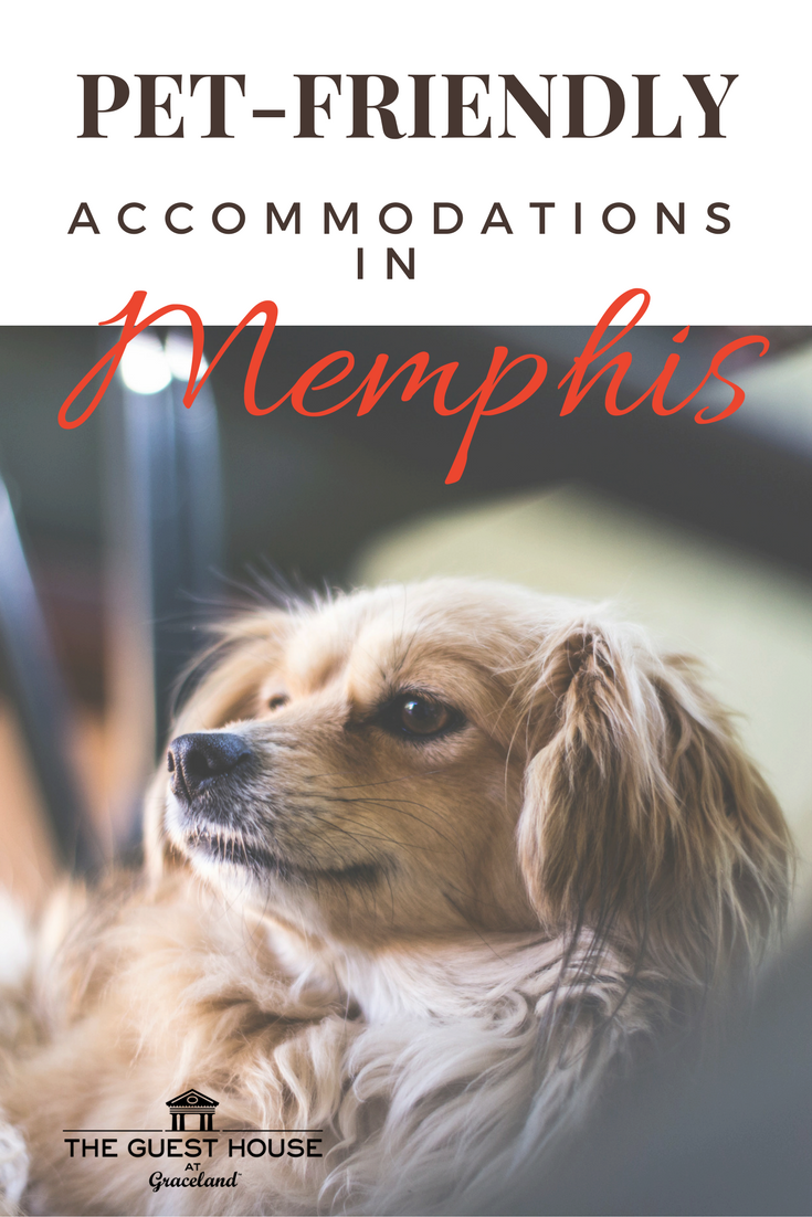 Don T Leave Your Fur Baby At Home Pet Friendly Accommodations At The Guest House At Graceland With Images Pet Friendly Accommodation Graceland Guest House