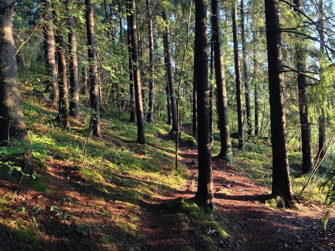 Mystinen metsä #venlojenvaellus  #loveturku #elämysliikuttaja #pääskyvuori…