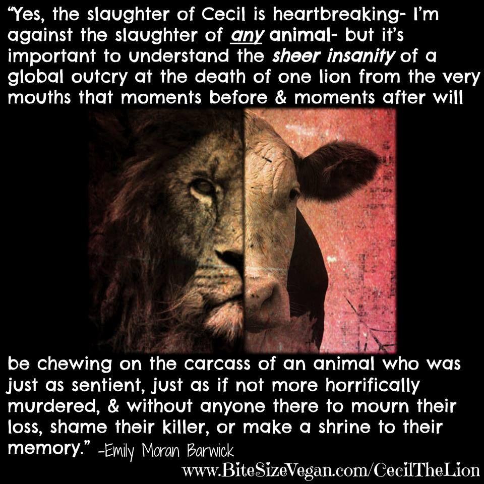 Animal Abuse Quotes Kingpinner Bobbyginnings  Animal Rights Love  Pinterest  Animal