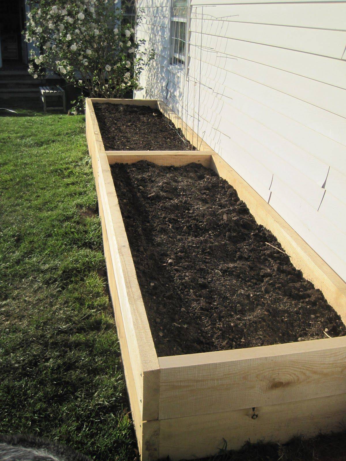 Tall Raised Garden Beds for the Yard with Dogs! Tall