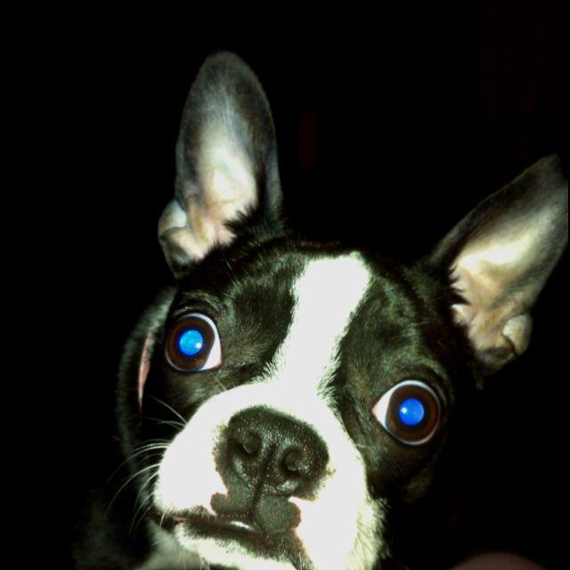 Miss Mollie...my blue eyed monster lol!