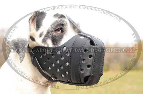 Ventilated Leather Muzzle For Great Dane Breed 49 00 Www