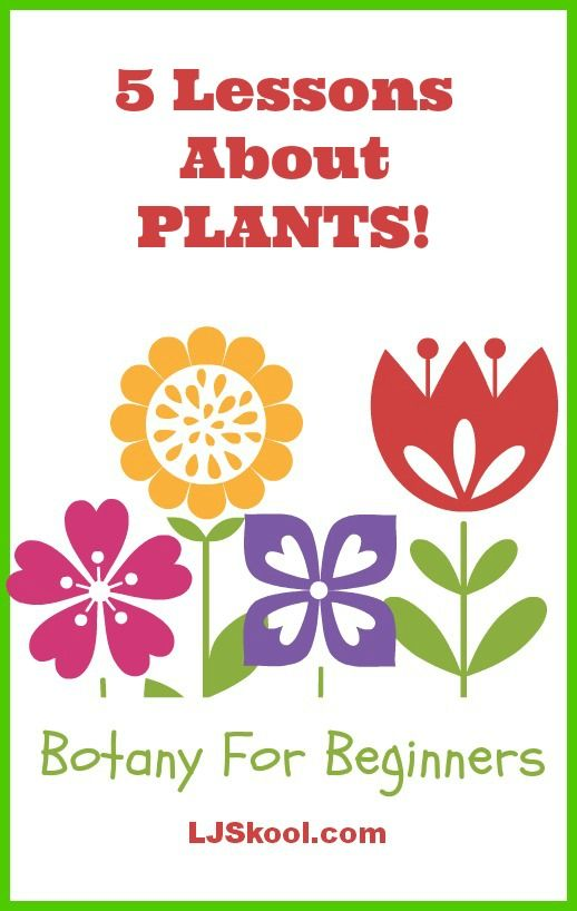 Botany For Beginners   An Introduction To The Science Of Plants: 5 Unit  Lessons About Botany For Early Elementary Using Videos, Interactive Websites,  ...