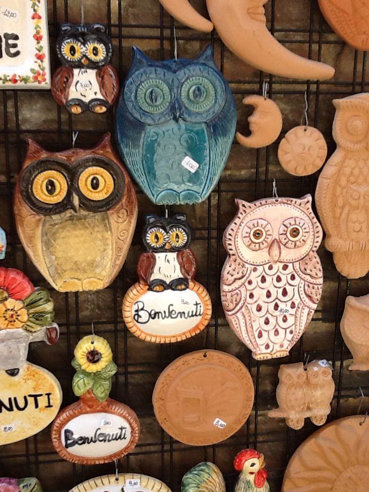 Owls/ BayKuşlar/ Civette