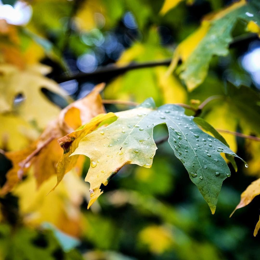 Plant Leaves Rain Chain Leaf Coloring