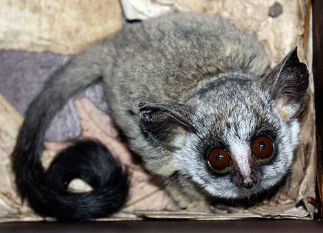 Baby Bush Baby These Are The Cutest Little Things In The History