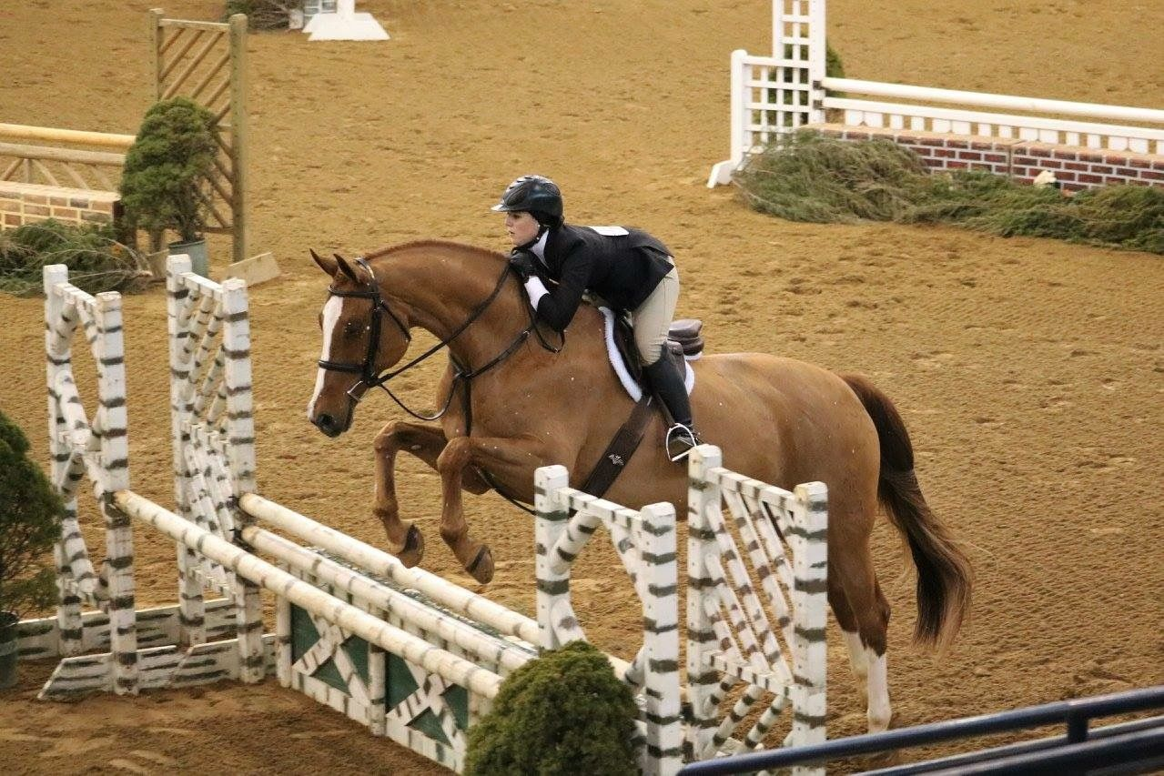 Pin by Sophie Claire Lansdown on Horses | Chestnut horse ...