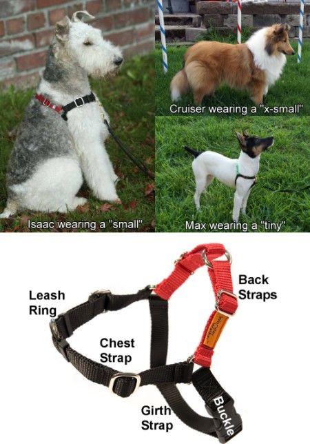 Wonder Walker Body Halter The Positive Management Solution For Walking Your Dog If He She Pulls Dog Walker Dog Training Classes Dog Harness