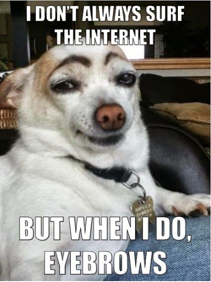 Lol Dog Pun Funny Animals How To Draw Eyebrows Funny Pictures