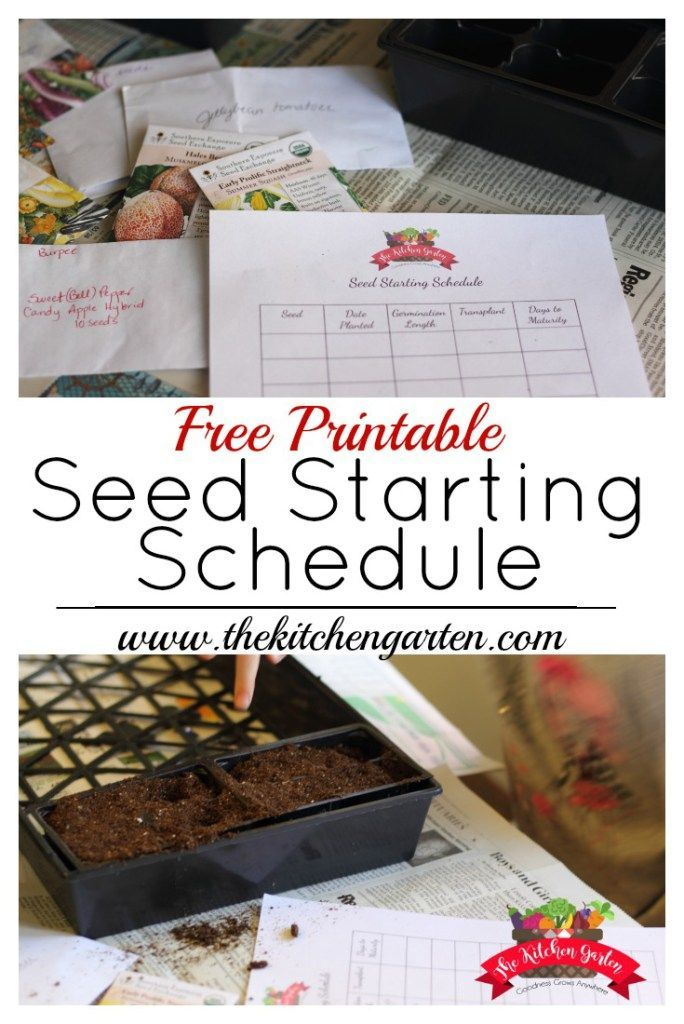 picture relating to Printable Seed Starting Chart known as Printable Seed Starting off Routine IHH~ Vegetable Gardening