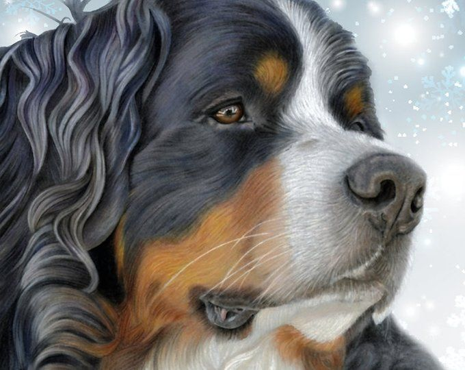 5 x bernese mountain greetings cards let it snow