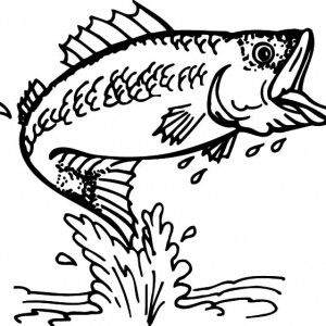 Bass Fish Outline Coloring Pages Best Place To Color Cards