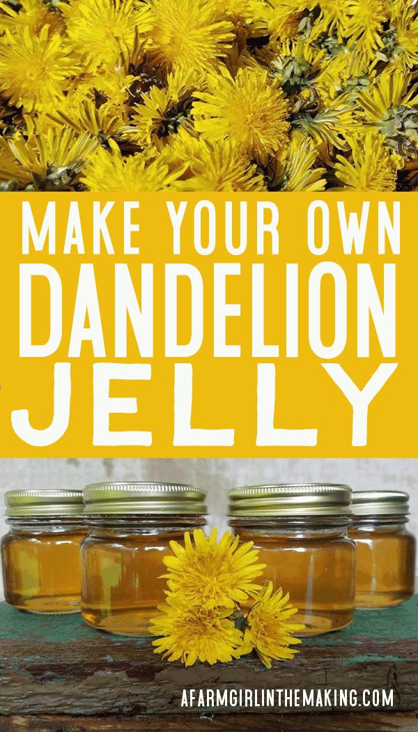 Canning Dandelion Flower Jelly A Farm Girl In The Making Recipe In 2020 Dandelion Jelly Dandelion Dandelion Flower