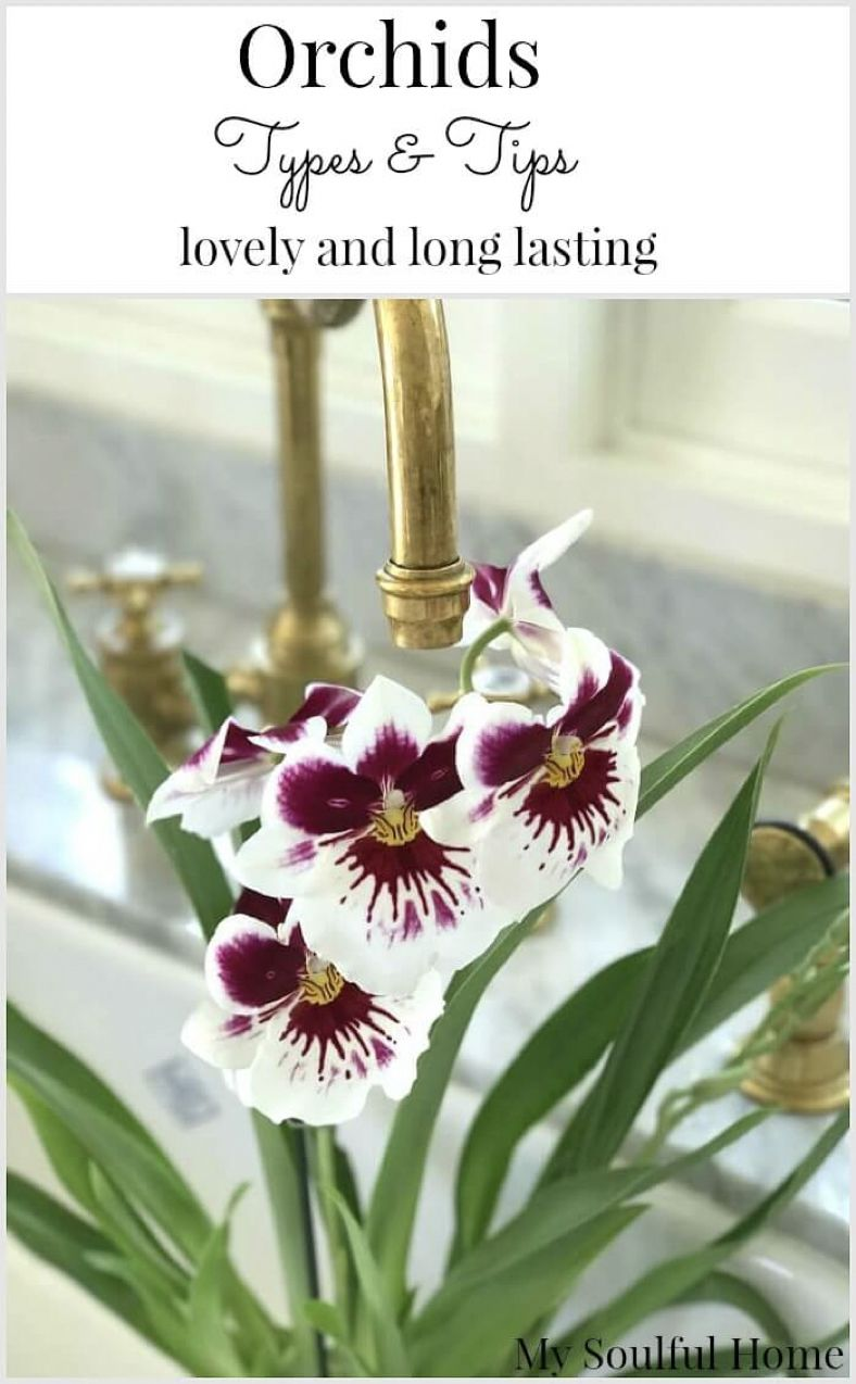 Orchids types and tips for care container gardening pinterest