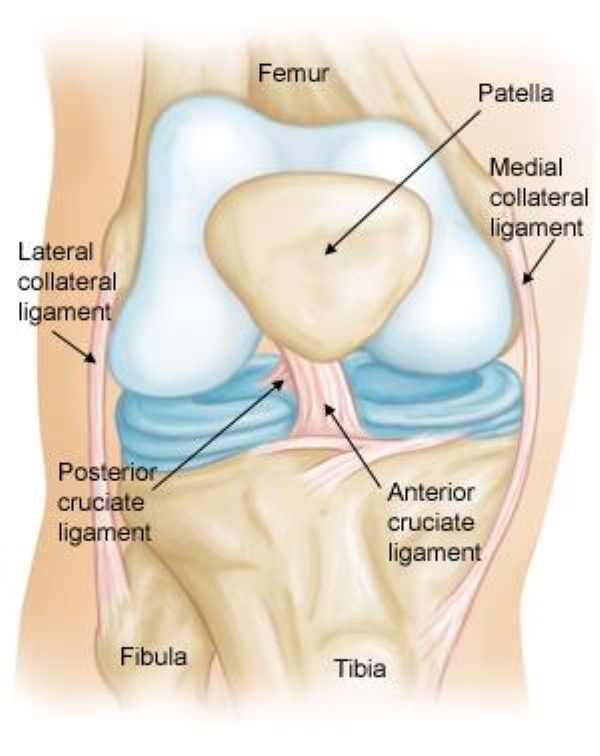 ACL injury - normal knee anatomy shown | Knee | Pinterest | Acl ...