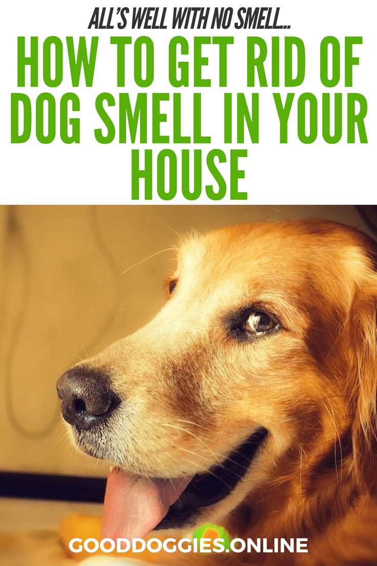 How To Get Rid Of Dog Smell In The House Dog Smells Smelly Dog Dog Cleaning