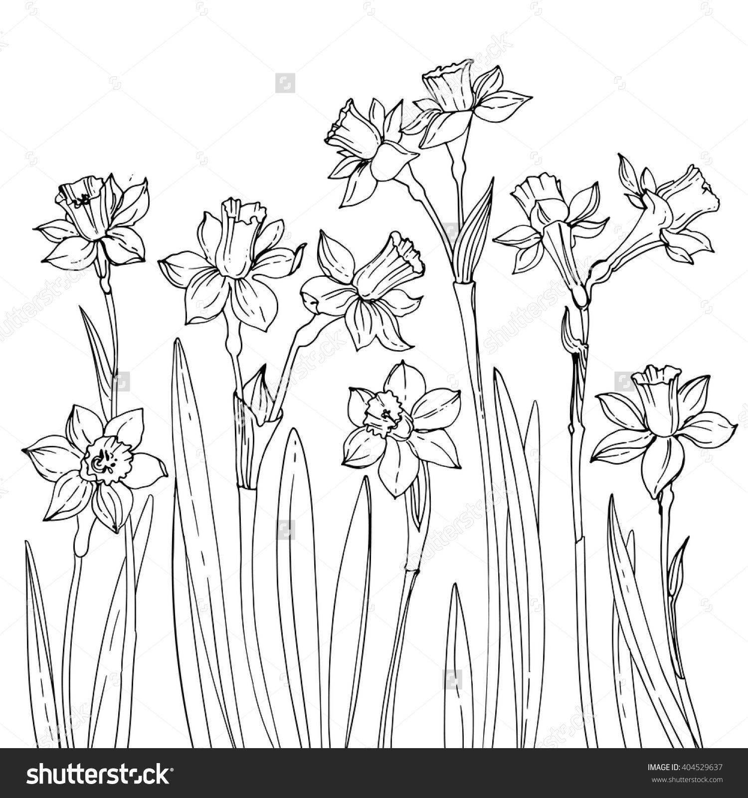 Line Drawing Daffodil : Black daffodil sketch google search daffodils
