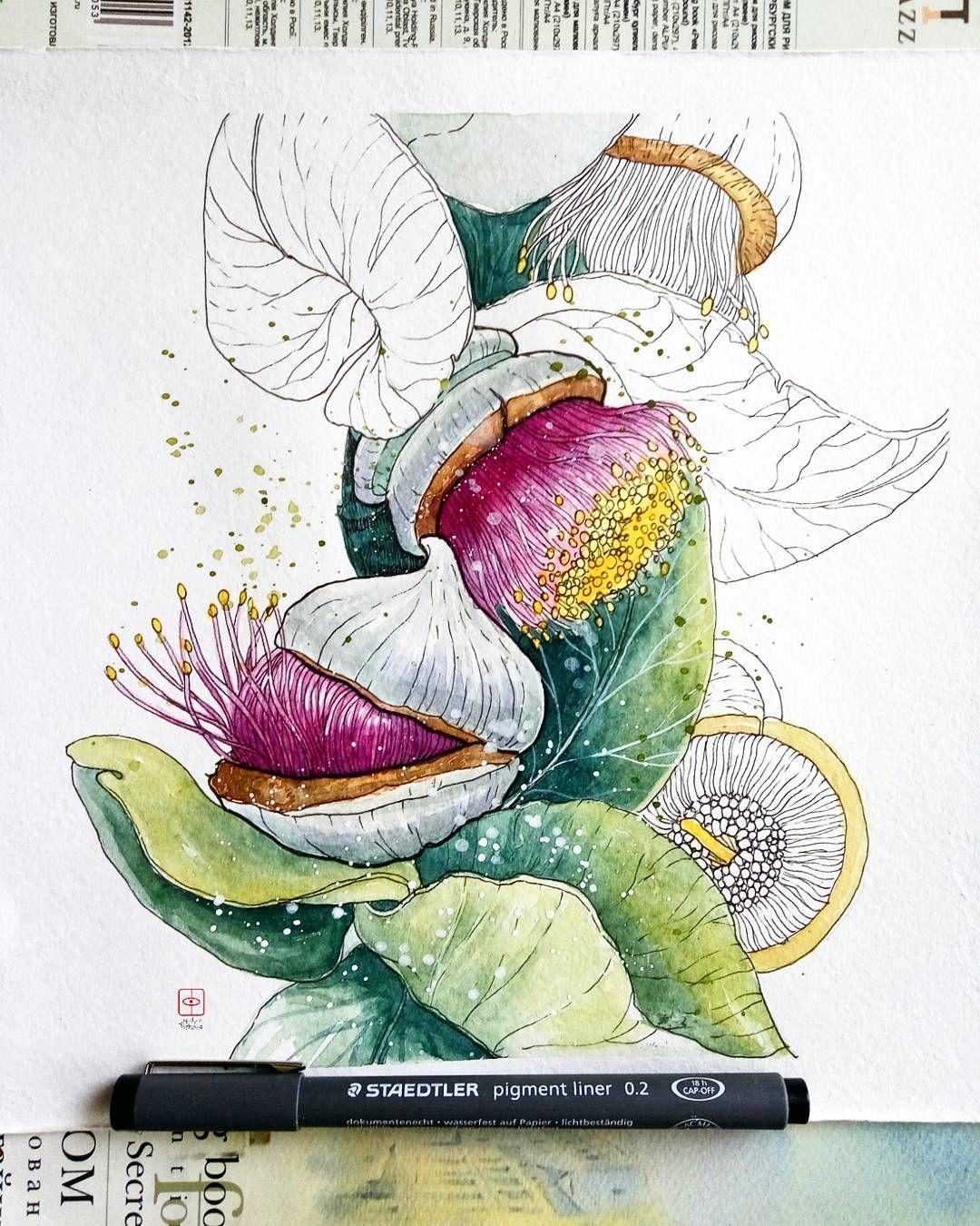 Evkalipt Krupnoplodnyj Ili Malli Roza Eucalyptus Macrocarpa Rose