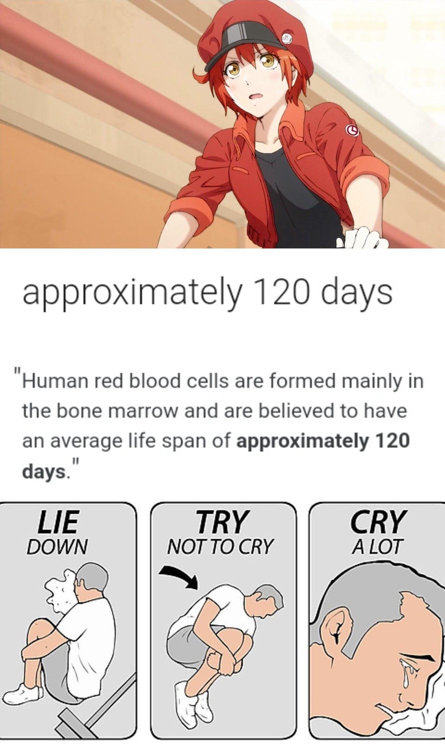 Pin On Cells At Work Meme