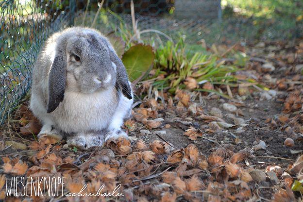 Kaninchen Im Garten Mein Garten Pinterest Animals