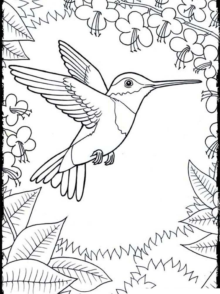 Hummingbird Coloring Pages Printable Printable Coloring Pages To Print Bird Coloring Pages Hummingbird Colors Printable Coloring Pages