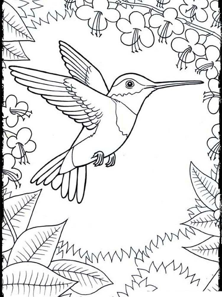 Hummingbird Coloring Pages Printable Printable Coloring Pages To Print Bird Coloring Pages Hummingbird Colors Printable Coloring Pages