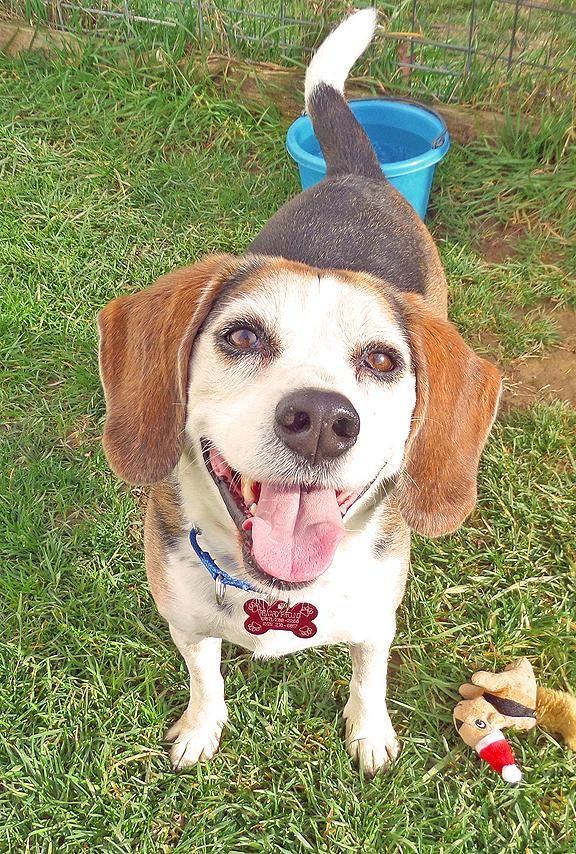 Adopt Dumpling on Shelter dogs, Animal throws, Adoptable