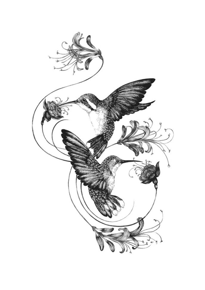 Image result for Honeysuckle and Hummingbird Tattoos Vine ...
