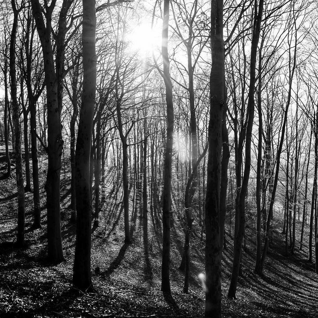Waldluft... das Wochenende steht vor der Tür  #gutenmorgen #wald #moments #trees #sonne #freitag # #fuchs