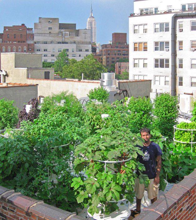 Future Growing Hits A Home Run With Aeroponic Tower Garden Farm Tower Garden Rooftop Garden Farm Gardens