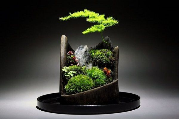 17 Best 1000 images about Bonsai on Pinterest Gardens Garden ideas