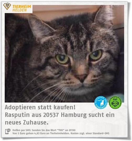 Rasputin wurde verletzt vom Tierheim Hamburg aufgegriffen