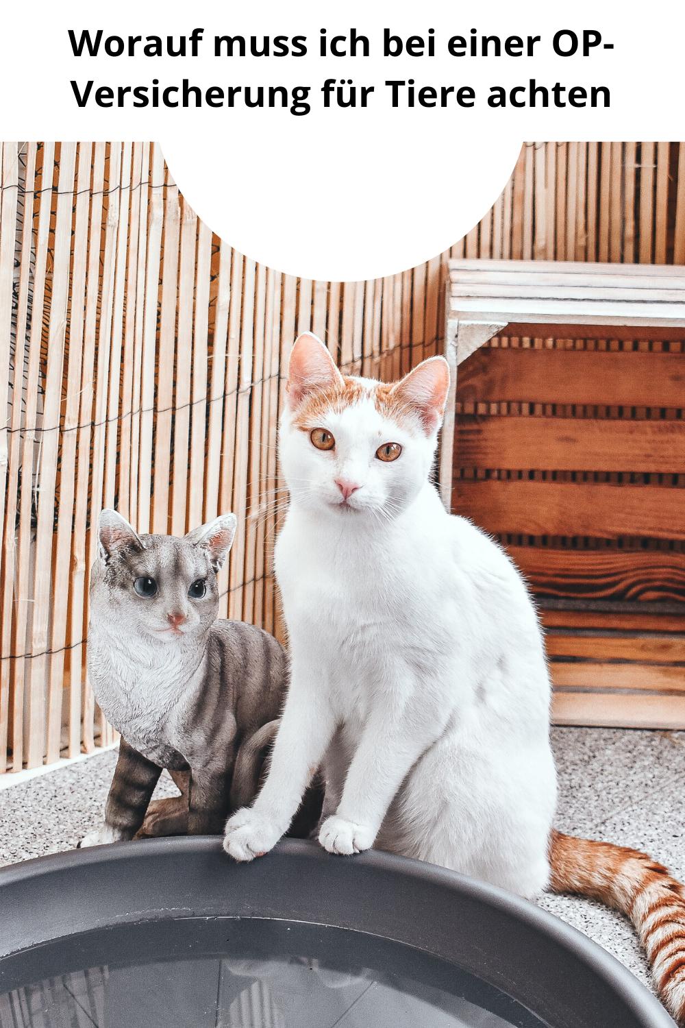 Anzeige Wenn Katzen Krank Werden Und Wie Man Sich Zumindest Finanziell Absichern Kann Calistas Traum Katzen Tiere Haustiere