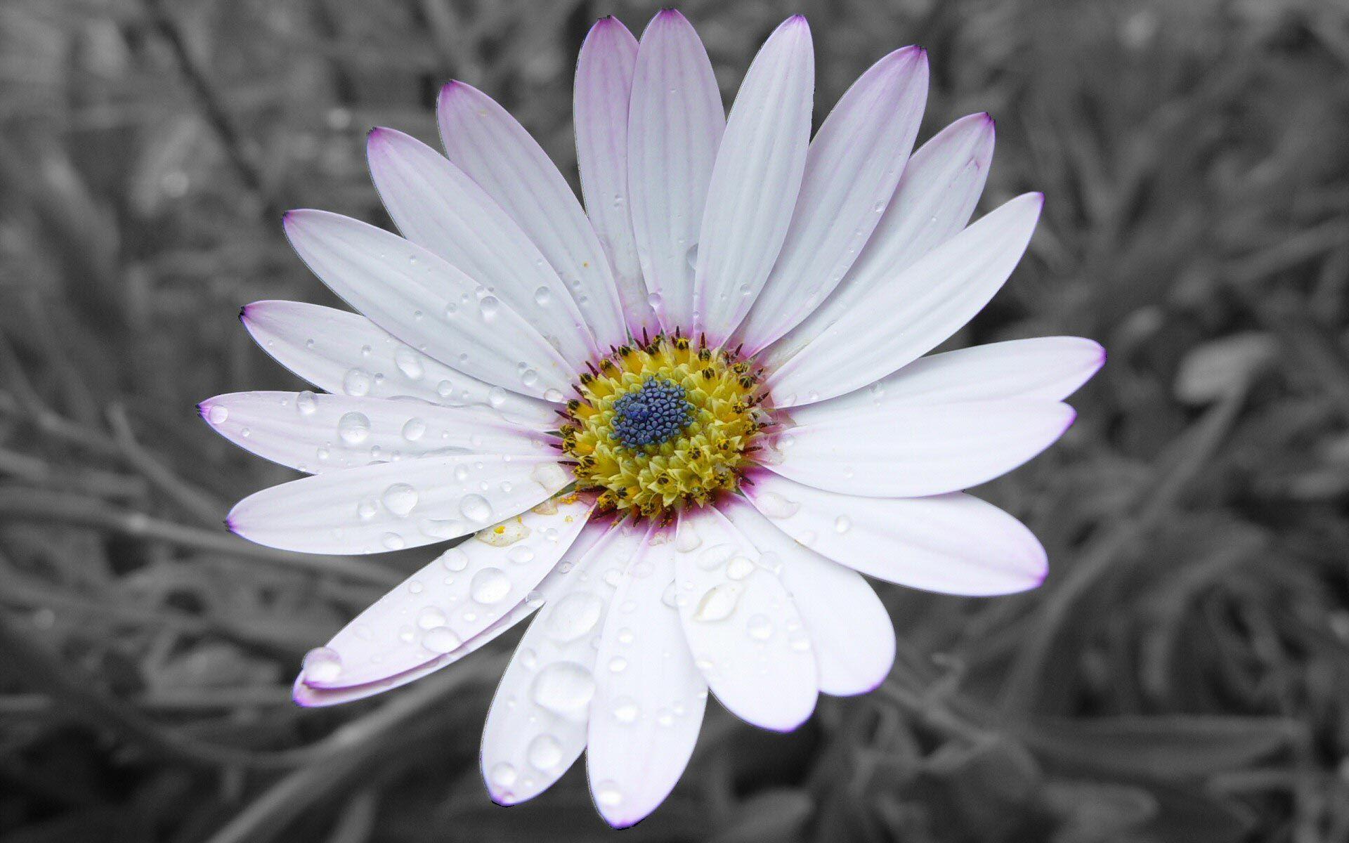 White   White Flower « Flowers & Grass « Nature « wallpapersfor.me