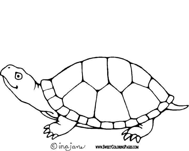 Turtle coloring page  coloring pages  Pinterest  Coloring
