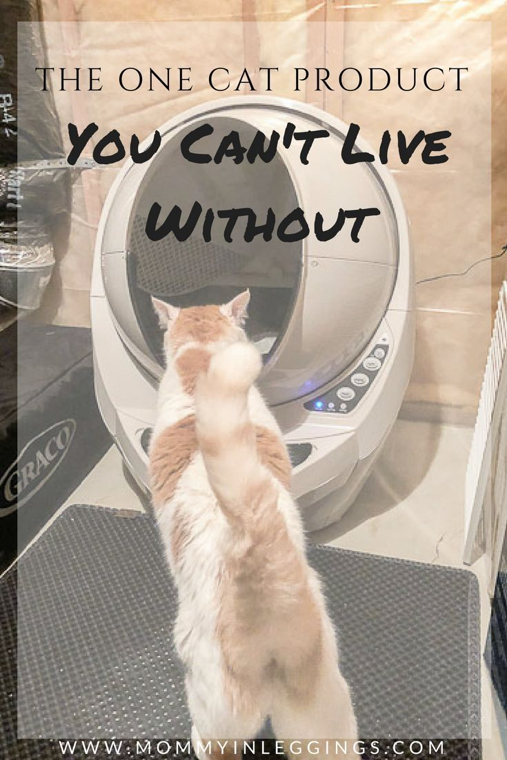 The Only Cat Product You MUST Have Litter robot, Cats