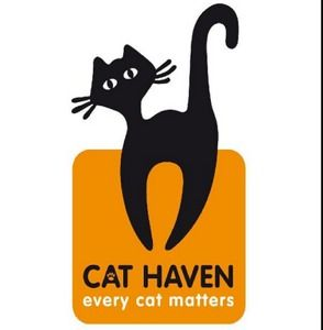 Free Adult Cat Adoption From Cat Haven Perth Cat Adoption Cats And Kittens Kitten For Sale