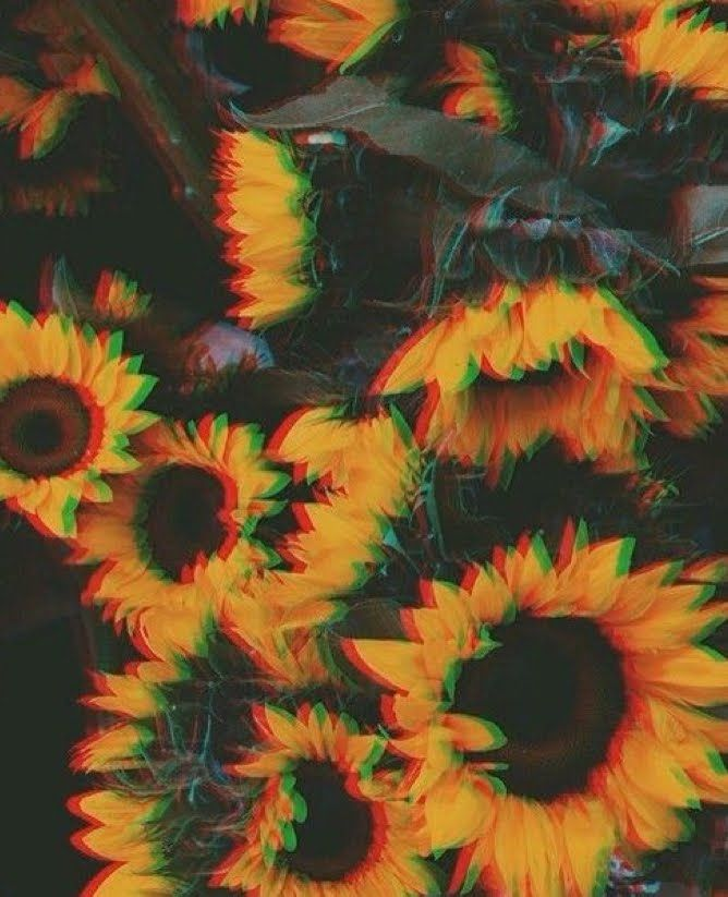 Done with this depressing shit #sunflower #goldendays #happy #yellowaestheticvintage