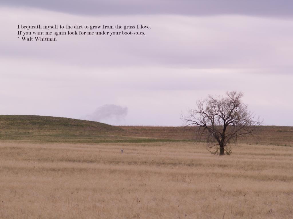 Nebraska quotes pictures | Nebraska Prarie 5-2012 - Walt Whitman